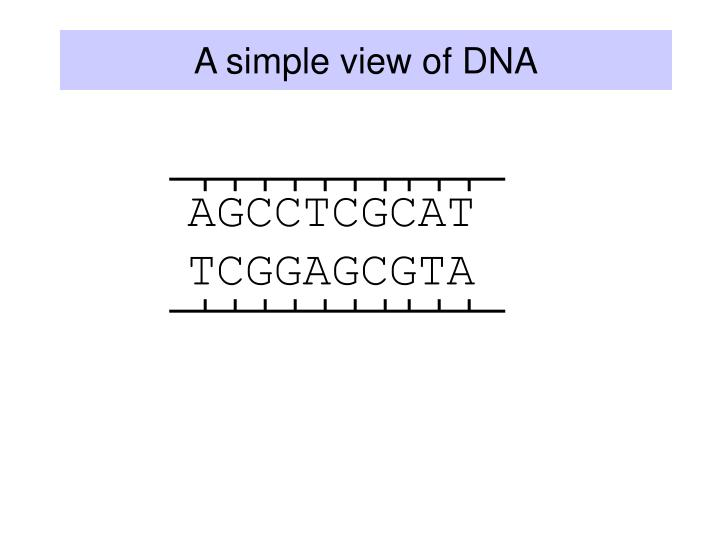 A simple view of dna
