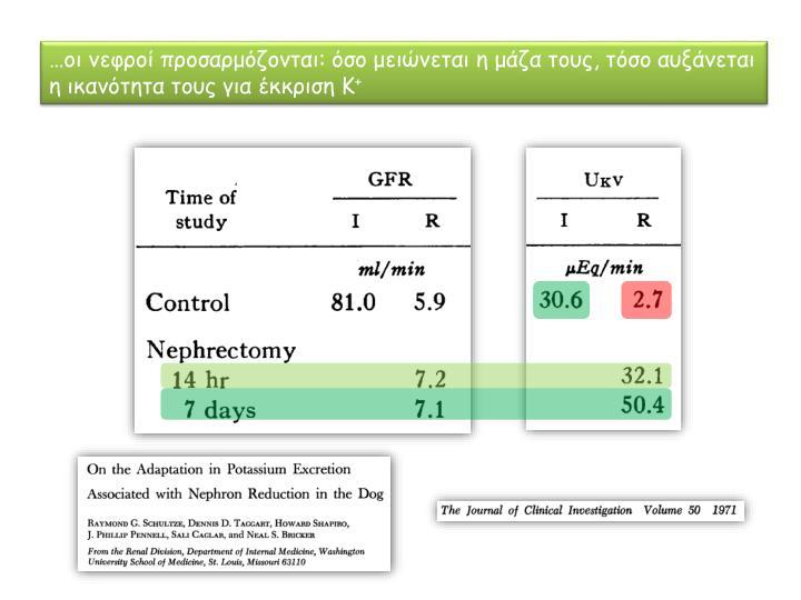 …οι νεφροί προσαρμόζονται: όσο μειώνεται η μάζα τους, τόσο αυξάνεται η ικανότητα τους για έκκριση Κ