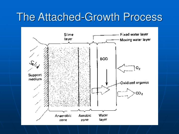 The Attached-Growth Process