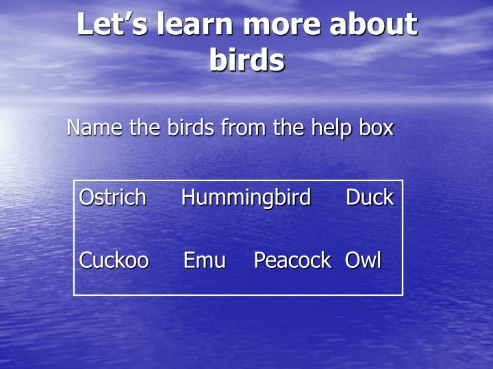 Let s learn more about birds