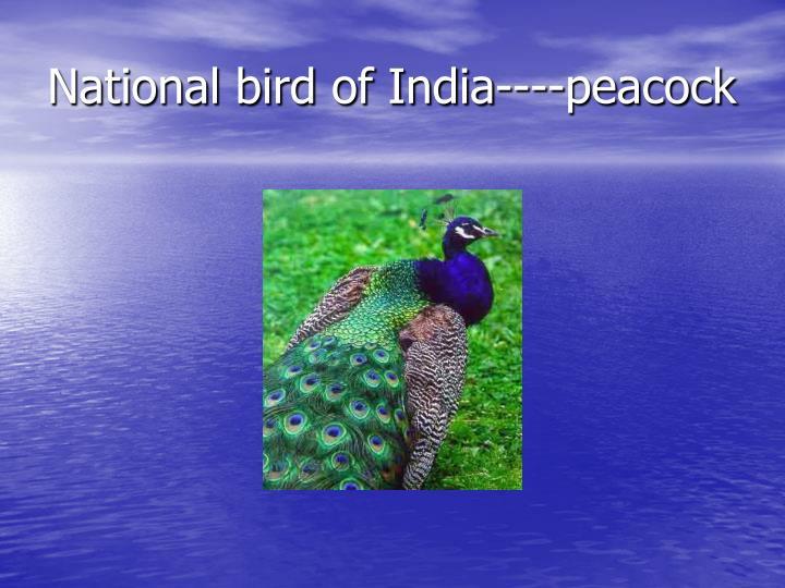 National bird of India----peacock