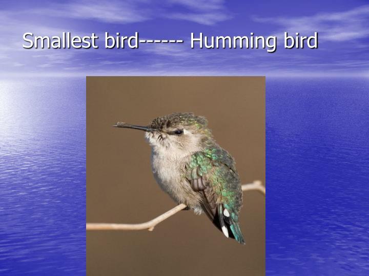 Smallest bird------ Humming bird