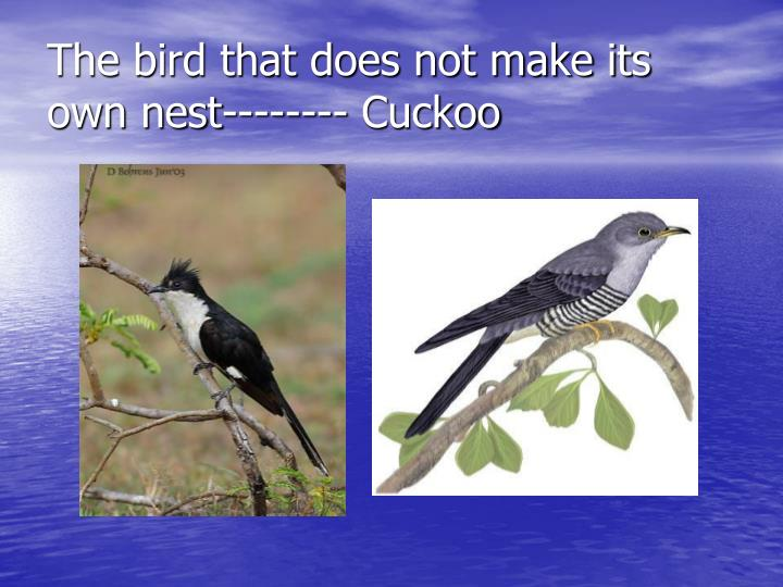 The bird that does not make its own nest-------- Cuckoo