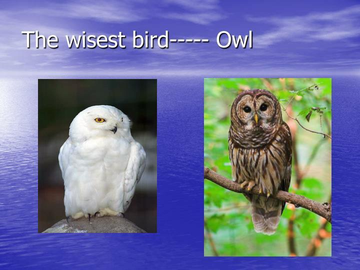 The wisest bird----- Owl