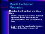 muscle contraction mechanics