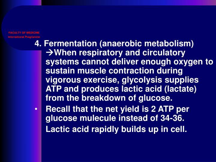 4. Fermentation (anaerobic metabolism)