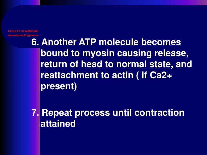 6. Another ATP molecule becomes bound to myosin causing release, return of head to normal state, and reattachment to actin ( if Ca2+ present)