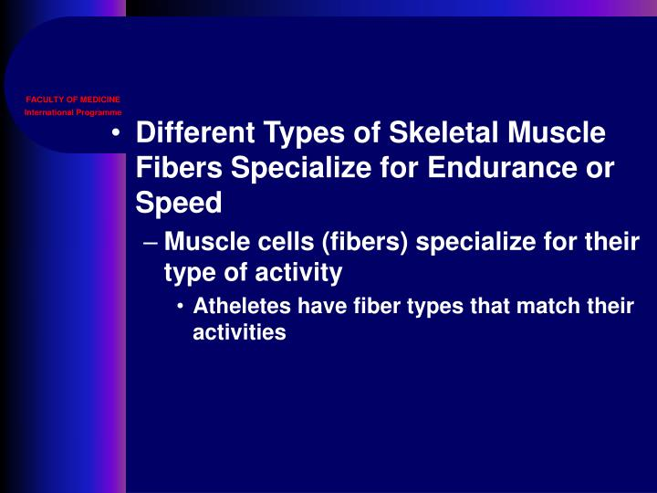 Different Types of Skeletal Muscle Fibers Specialize for Endurance or Speed