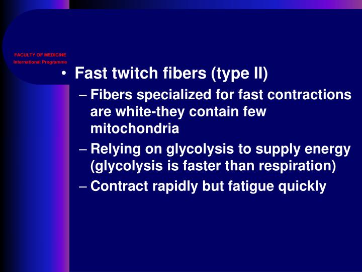 Fast twitch fibers (type II)