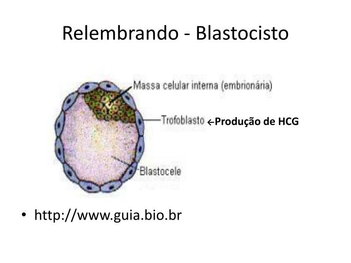 Relembrando - Blastocisto