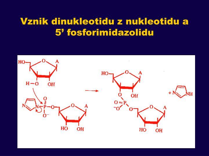 Vznik dinukleotid
