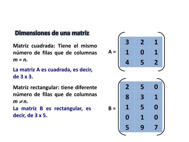 Dimensiones de una matriz