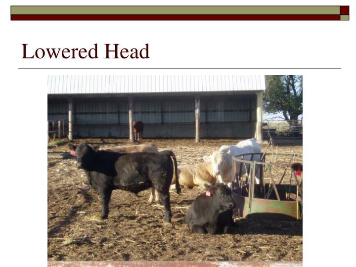 Lowered Head