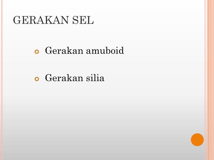 GERAKAN SEL