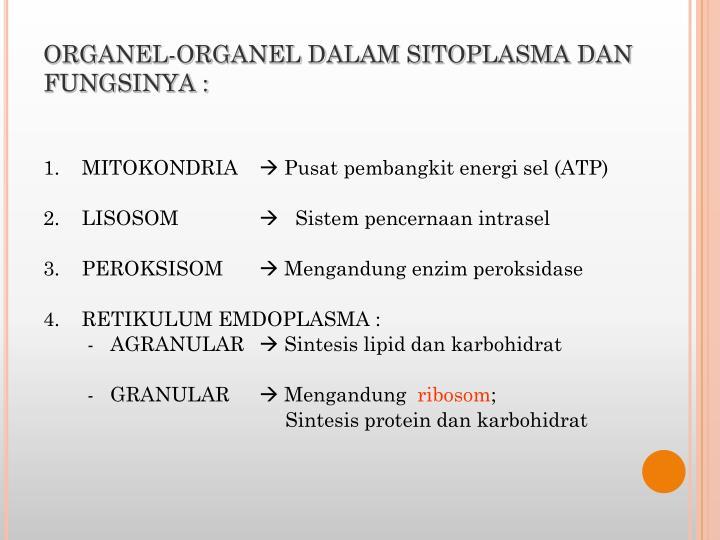ORGANEL-ORGANEL DALAM SITOPLASMA DAN