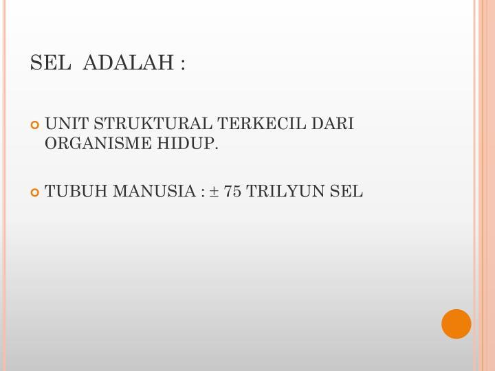 SEL  ADALAH :