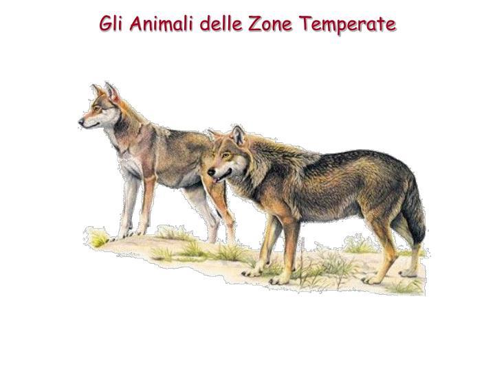 Gli Animali delle Zone Temperate