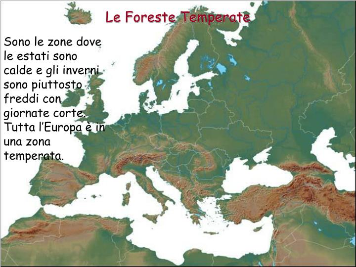 Le Foreste Temperate