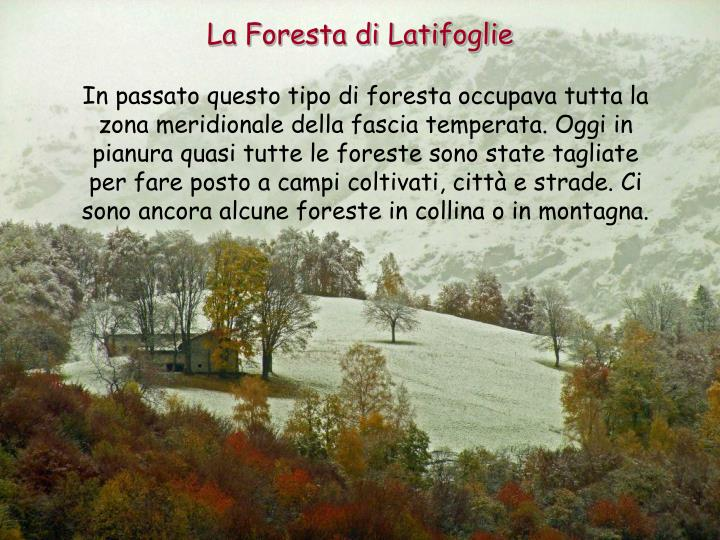La Foresta di Latifoglie