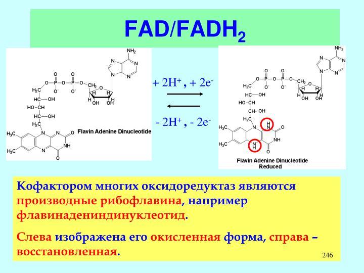 FAD/FADH