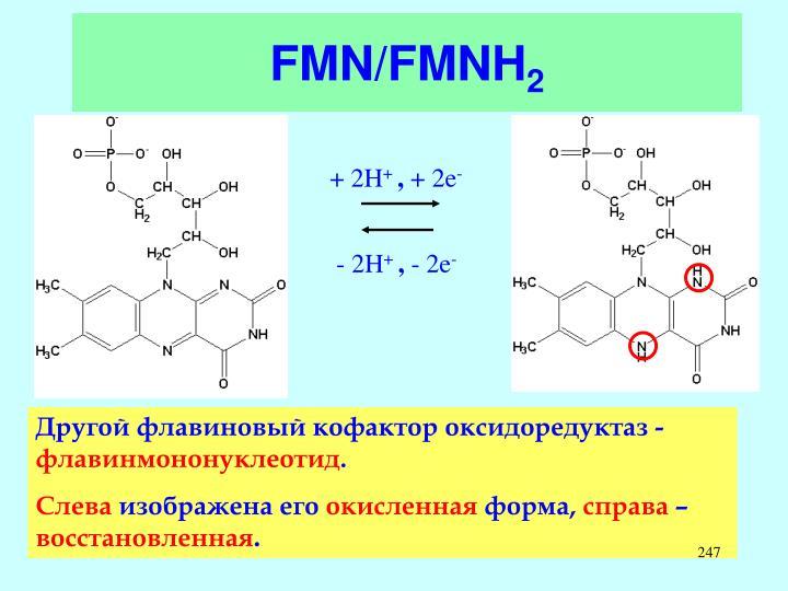FMN/FMNH