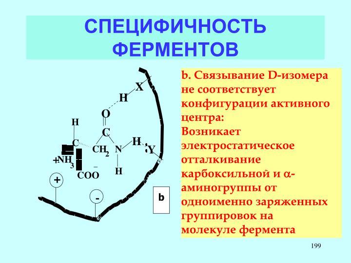 СПЕЦИФИЧНОСТЬ ФЕРМЕНТОВ