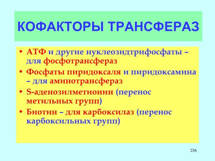 КОФАКТОРЫ ТРАНСФЕРАЗ