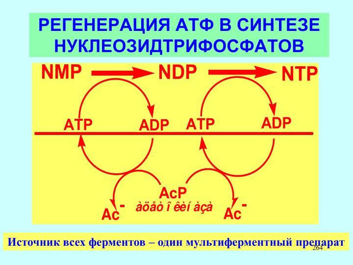 РЕГЕНЕРАЦИЯ АТФ В СИНТЕЗЕ НУКЛЕОЗИДТРИФОСФАТОВ