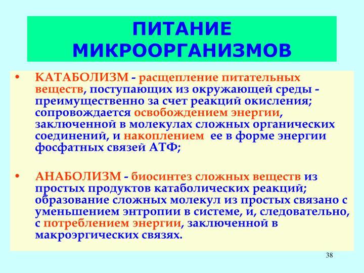 ПИТАНИЕ МИКРООРГАНИЗМОВ
