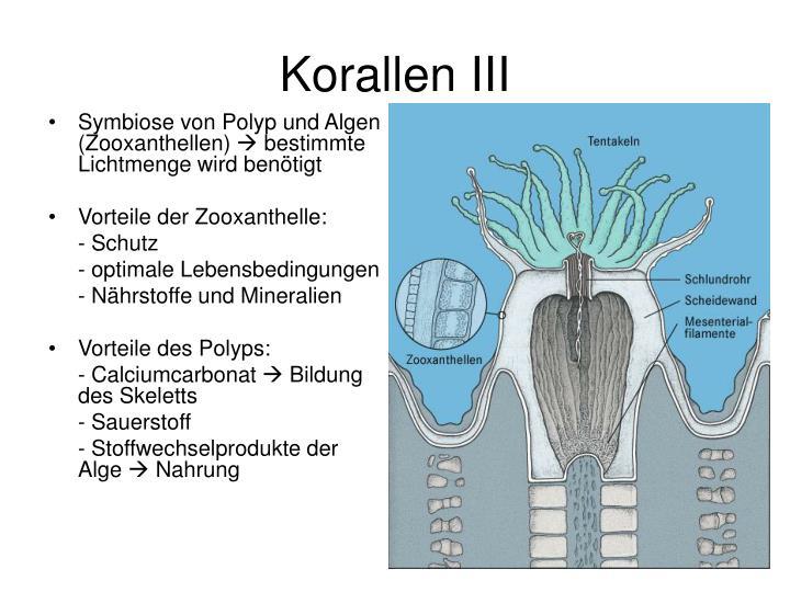 Korallenriffe Entstehung