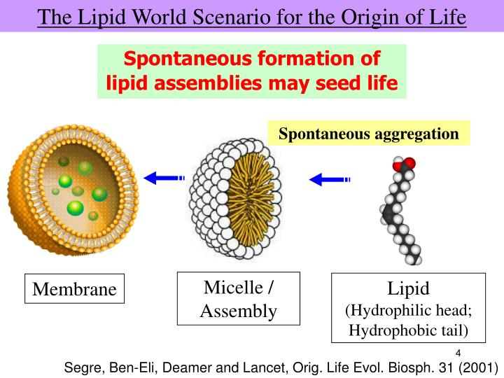 The Lipid World Scenario for the Origin of Life