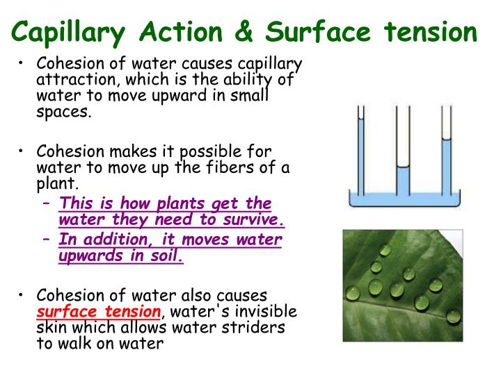 Capillary Action & Surface tension