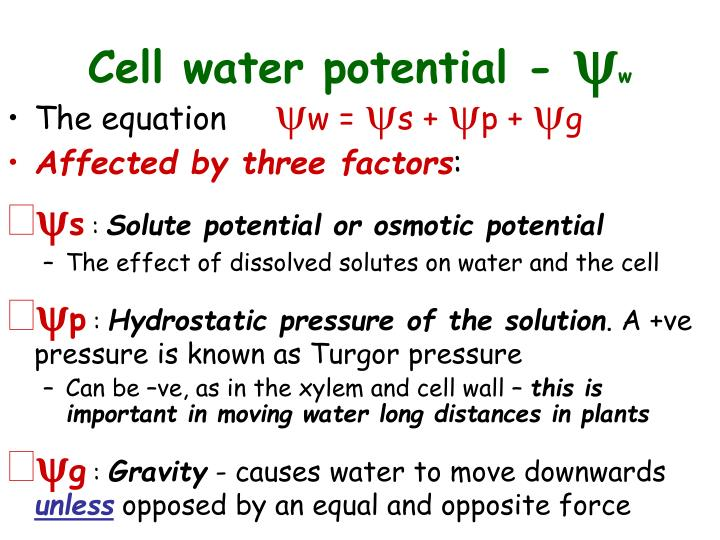 Cell water potential -