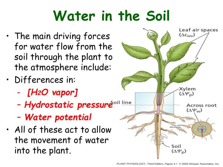 Water in the Soil