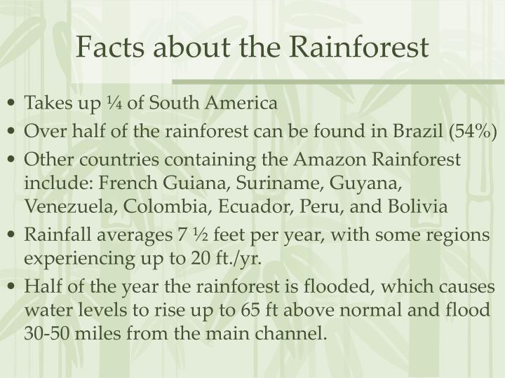 Facts about the Rainforest