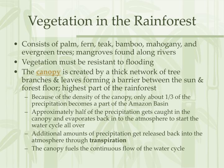 Vegetation in the Rainforest
