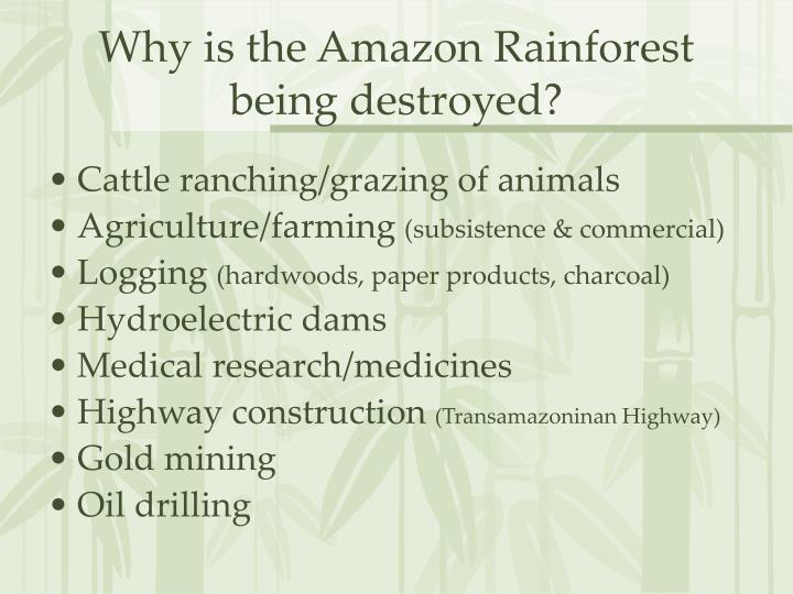 Why is the Amazon Rainforest being destroyed?
