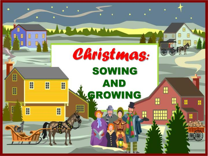 Christmas sowing and growing