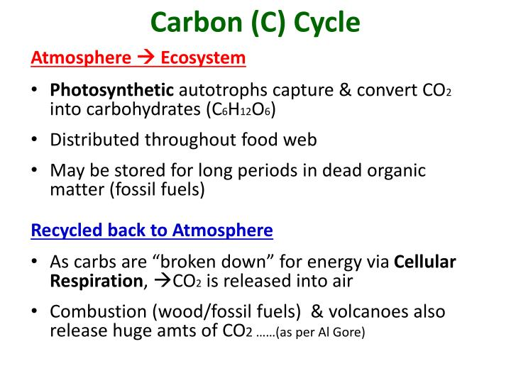 Carbon (C) Cycle