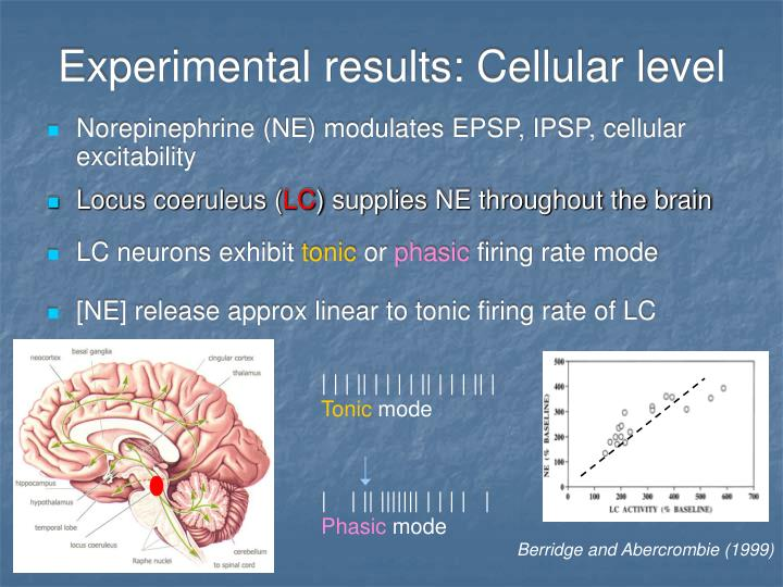 Experimental results: Cellular level
