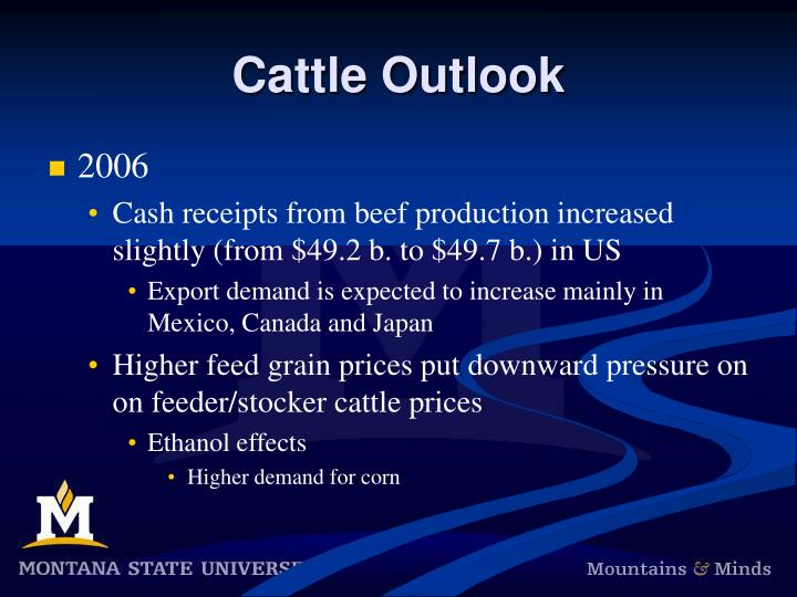Cattle Outlook
