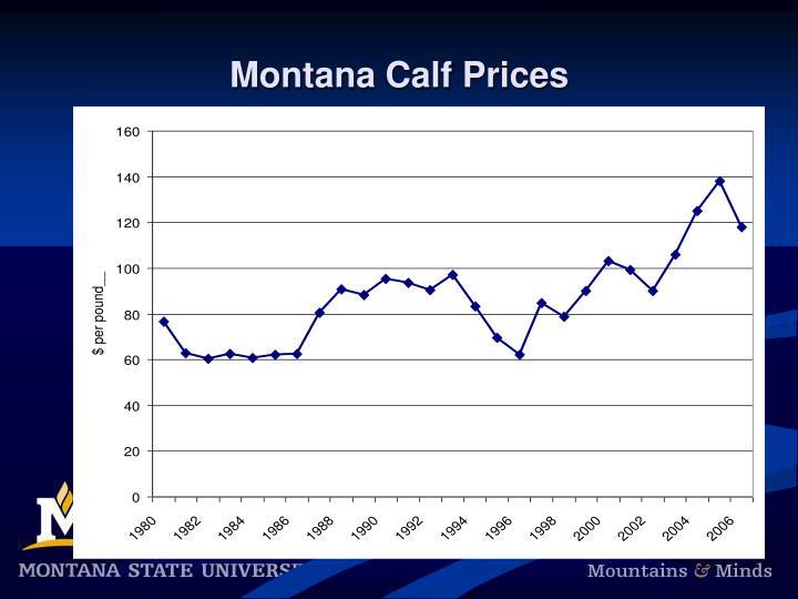 Montana Calf Prices