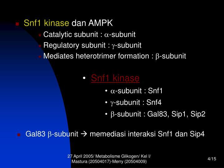 Snf1 kinase