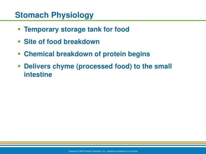 Stomach Physiology