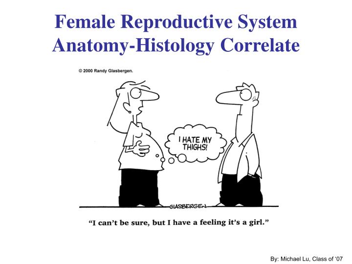 Female reproductive system anatomy histology correlate