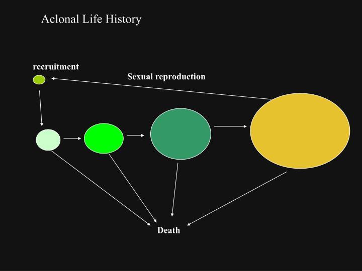Aclonal Life History
