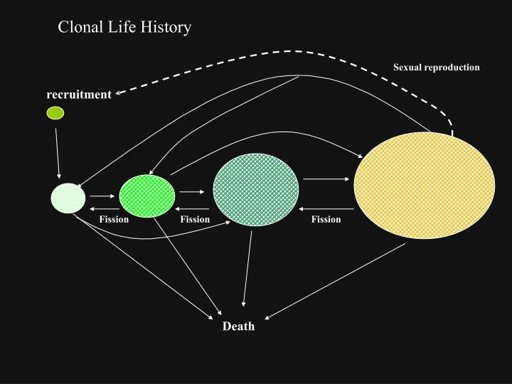 Clonal Life History