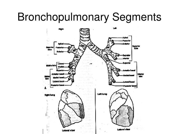 Bronchopulmonary Segments