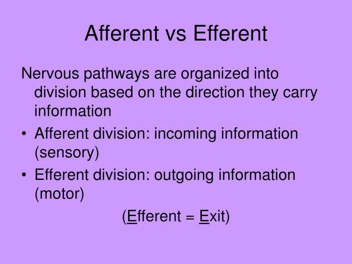 Afferent vs Efferent