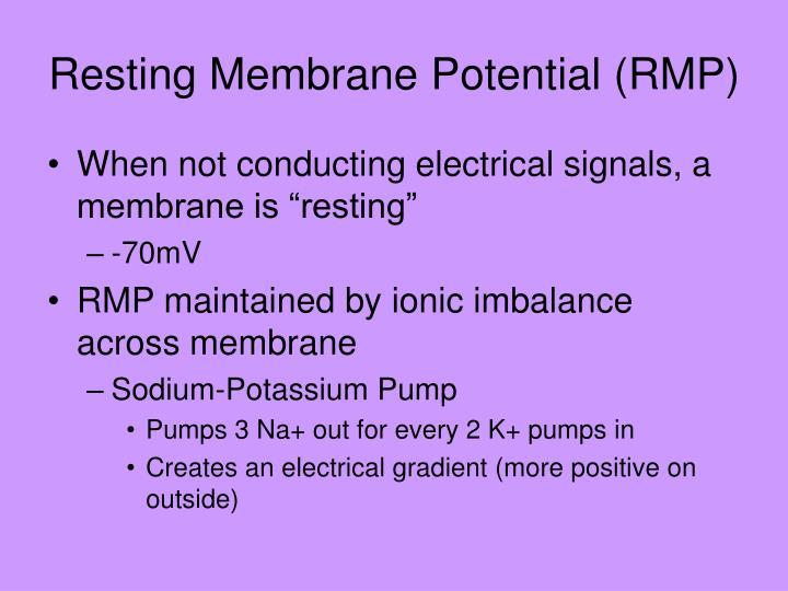 Resting Membrane Potential (RMP)